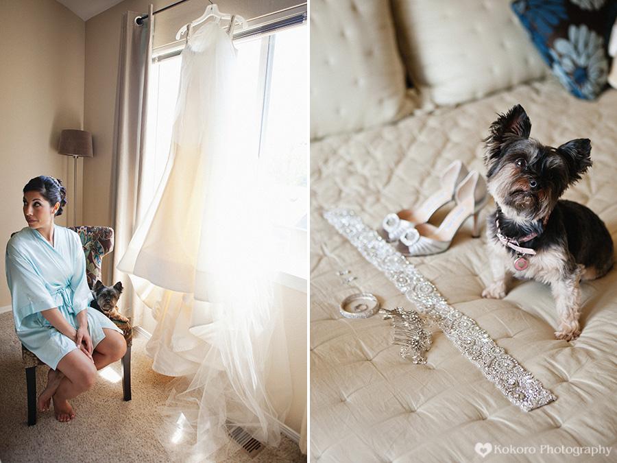 Denver Wedding Dog Photography